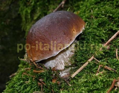 Пенне с форелью и свежими грибами